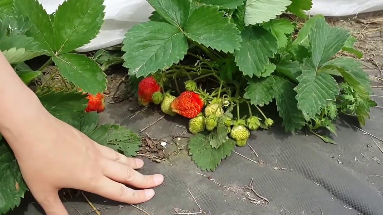 агроволокно для огорода
